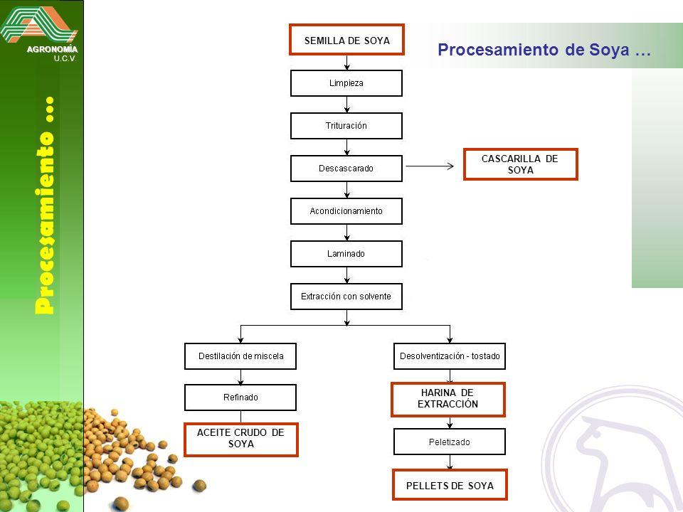 AGRONOMÍA U.C.V. Procesamiento … Procesamiento de Soya … Peletizado ACEITE CRUDO DE SOYA HARINA DE EXTRACCIÓN SEMILLA DE SOYA PELLETS DE SOYA CASCARIL