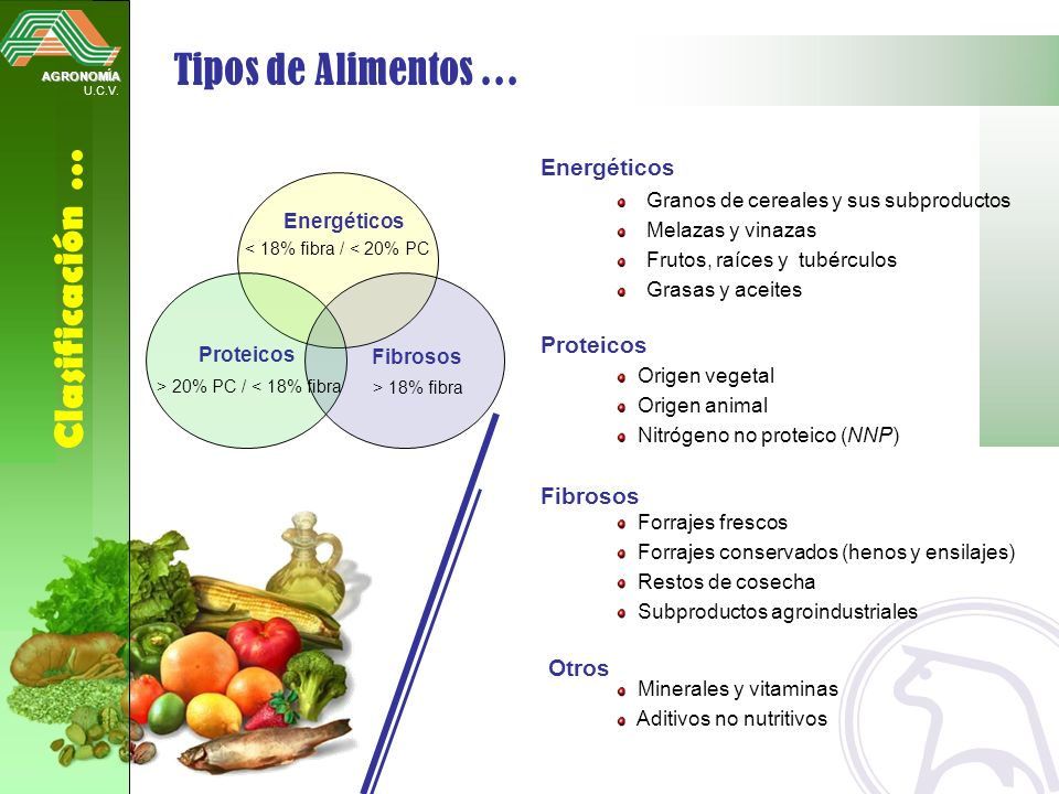 AGRONOMÍA U.C.V. Clasificación … Tipos de Alimentos … Energéticos Proteicos Fibrosos < 18% fibra / < 20% PC > 18% fibra > 20% PC / < 18% fibra Origen