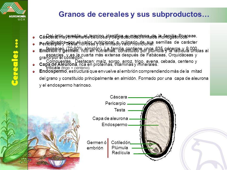 AGRONOMÍA U.C.V. Cereales … Granos de cereales y sus subproductos… Del latín cereālis, el termino identifica a miembros de la familia Poaceae, cultiva