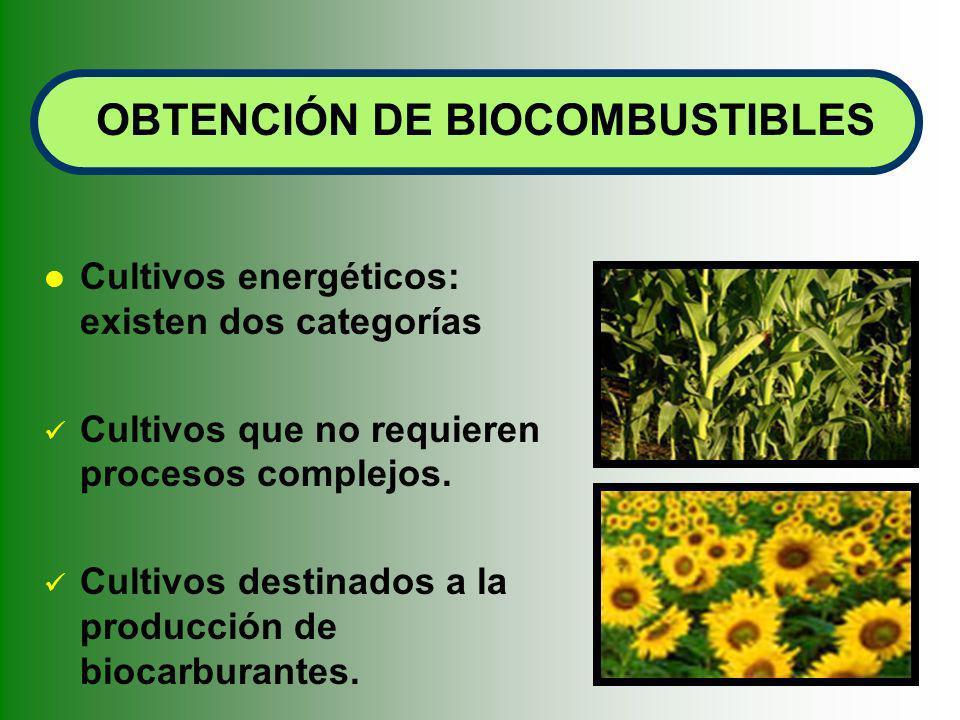 Cultivos energéticos: existen dos categorías Cultivos que no requieren procesos complejos. Cultivos destinados a la producción de biocarburantes. OBTE