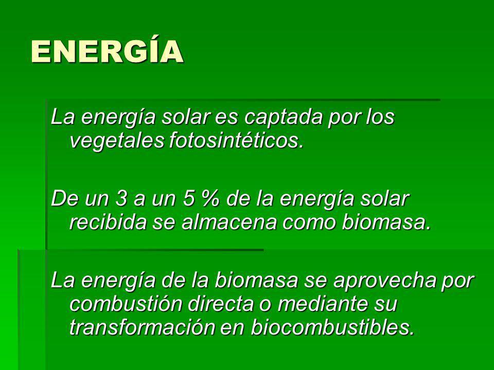 ENERGÍA La energía solar es captada por los vegetales fotosintéticos. De un 3 a un 5 % de la energía solar recibida se almacena como biomasa. La energ