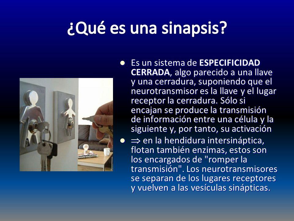 Es un sistema de ESPECIFICIDAD CERRADA, algo parecido a una llave y una cerradura, suponiendo que el neurotransmisor es la llave y el lugar receptor l