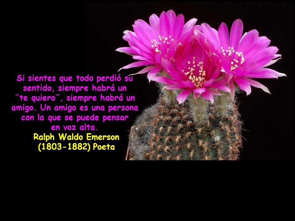 El amigo ha de ser como el dinero, que antes de necesitarlo, se sabe el valor que tiene.