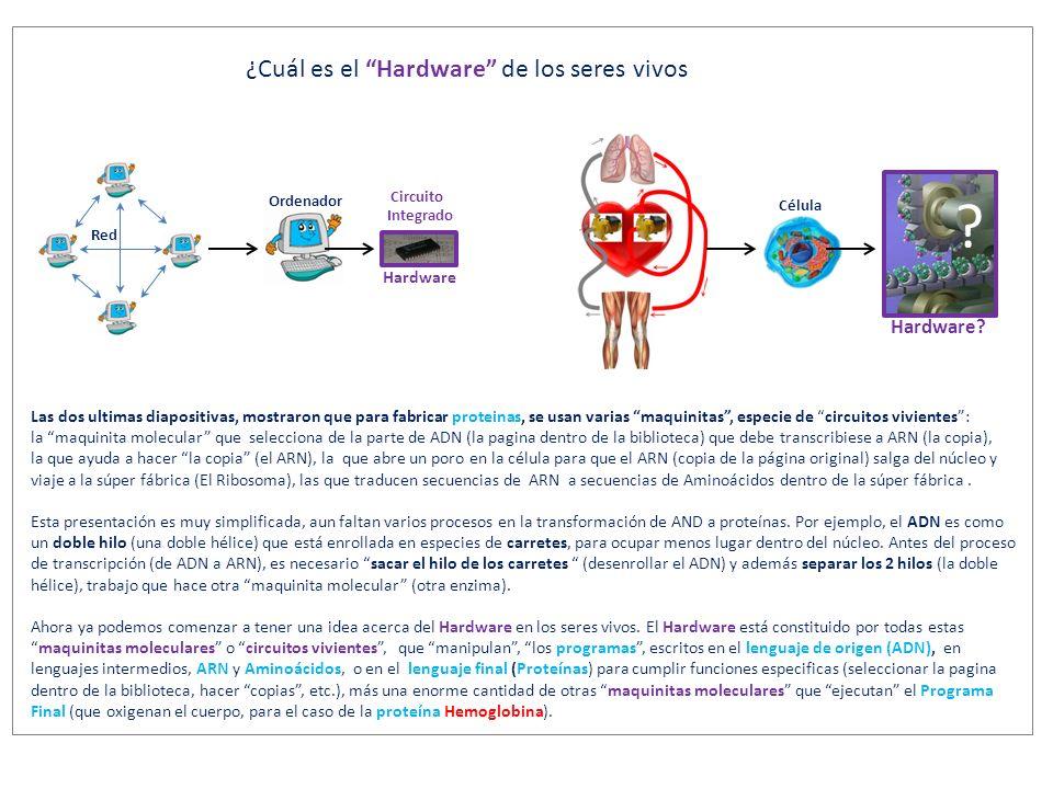 Ahora surgen varias preguntas relacionadas con estas maquinitas moleculares… ?...