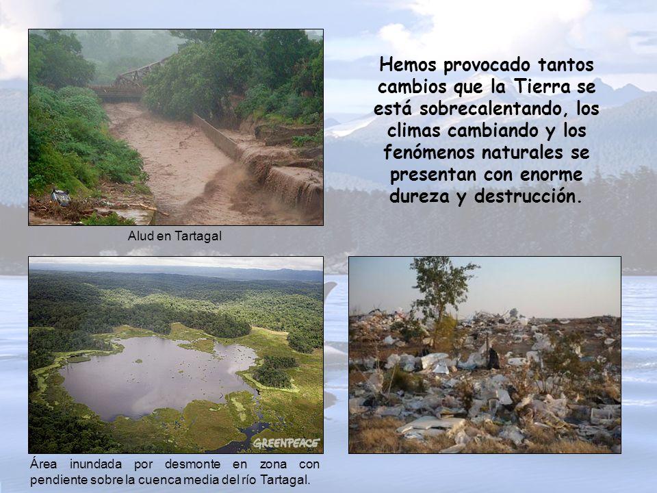 Millones de hectáreas de bosques han desaparecido, plantas y animales se han extinguido; la contaminación afecta al aire, al agua, al suelo… Felis par