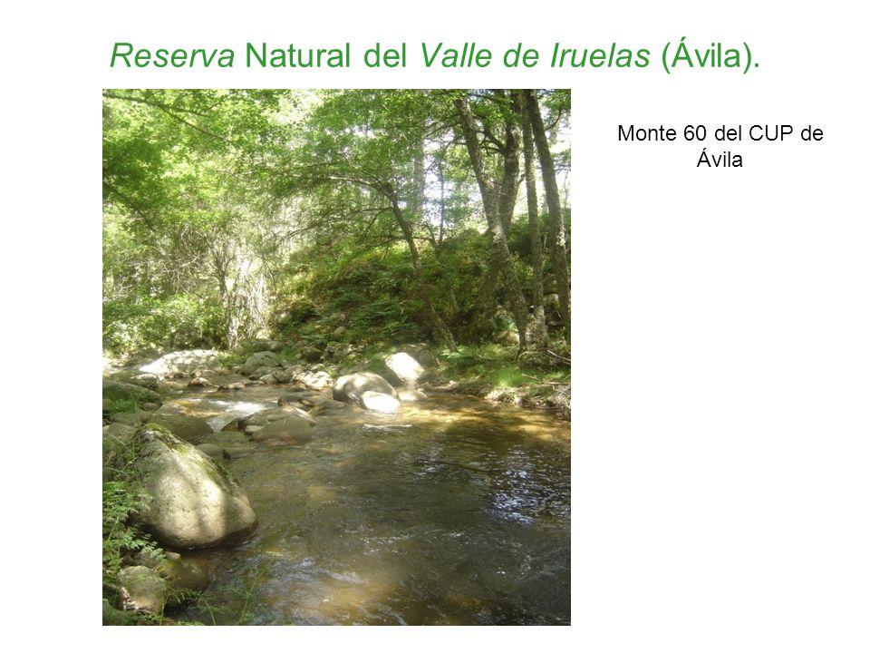 Reserva Natural del Valle de Iruelas (Ávila). Monte 60 del CUP de Ávila