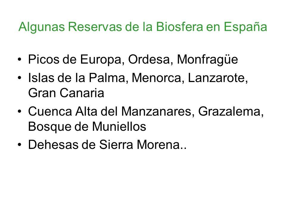 Algunas Reservas de la Biosfera en España Picos de Europa, Ordesa, Monfragüe Islas de la Palma, Menorca, Lanzarote, Gran Canaria Cuenca Alta del Manzanares, Grazalema, Bosque de Muniellos Dehesas de Sierra Morena..