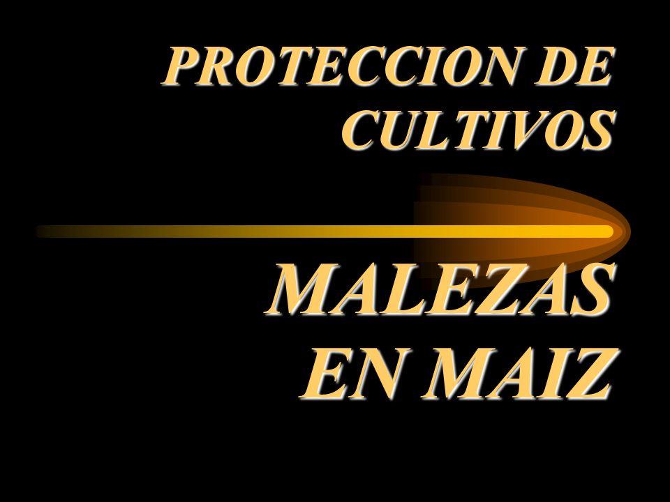 PROTECCION DE CULTIVOS MALEZAS EN MAIZ
