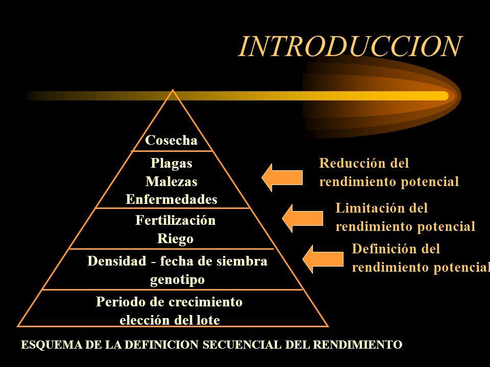 IMPORTANCIA ECONOMICA CONTROL Y MANEJO INTEGRADO BIOTECNOLOGIA E INGENIERIA GENETICA DINAMICA POBLACIONAL