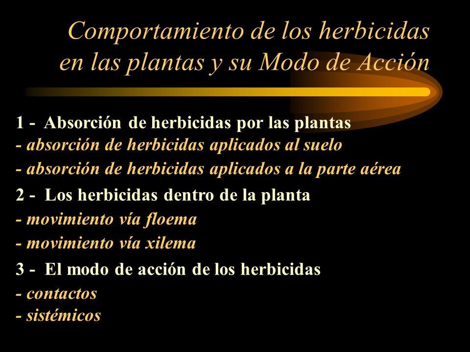 Comportamiento de los herbicidas en las plantas y su Modo de Acción 1 - Absorción de herbicidas por las plantas - absorción de herbicidas aplicados al