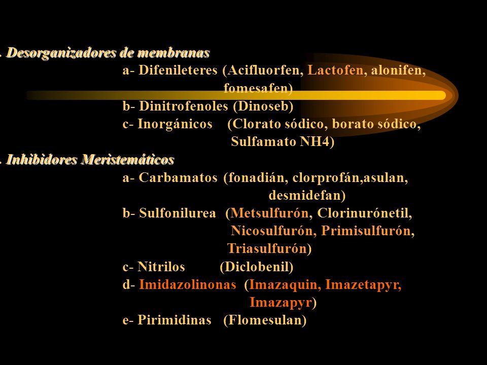 Desorganizadores de membranas 2. Desorganizadores de membranas a- Difenileteres (Acifluorfen, Lactofen, alonifen, fomesafen) b- Dinitrofenoles (Dinose