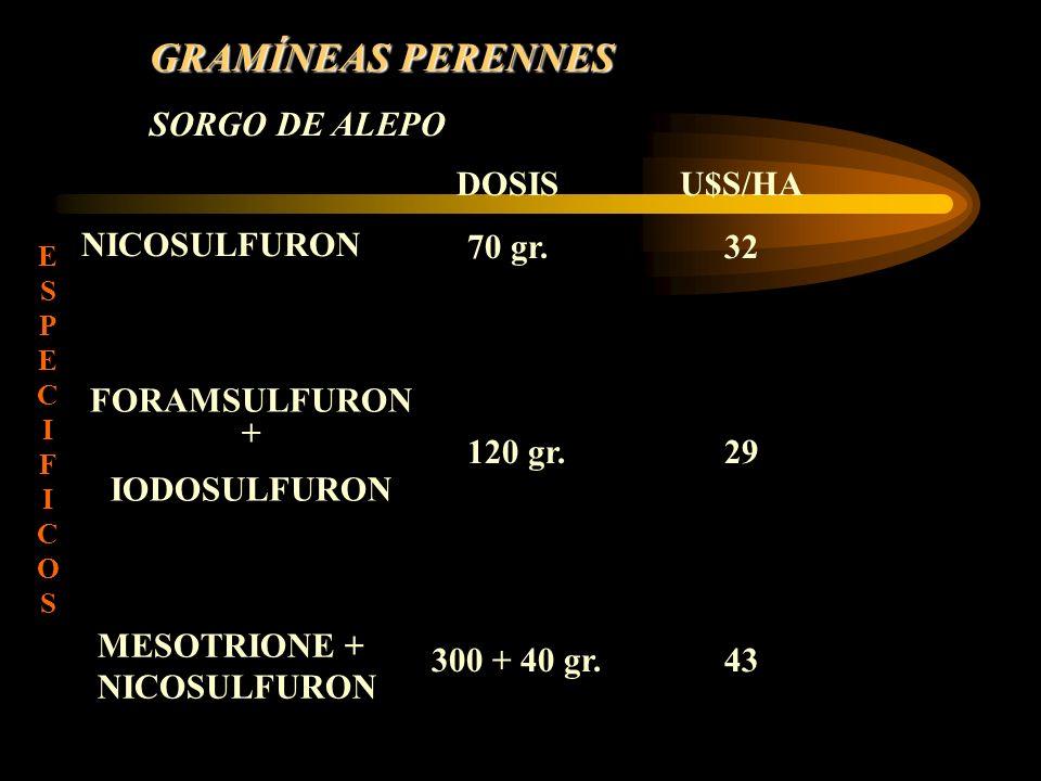 GRAMÍNEAS PERENNES SORGO DE ALEPO NICOSULFURON DOSIS 70 gr. U$S/HA 32 FORAMSULFURON + IODOSULFURON 120 gr.29 MESOTRIONE + NICOSULFURON 300 + 40 gr.43