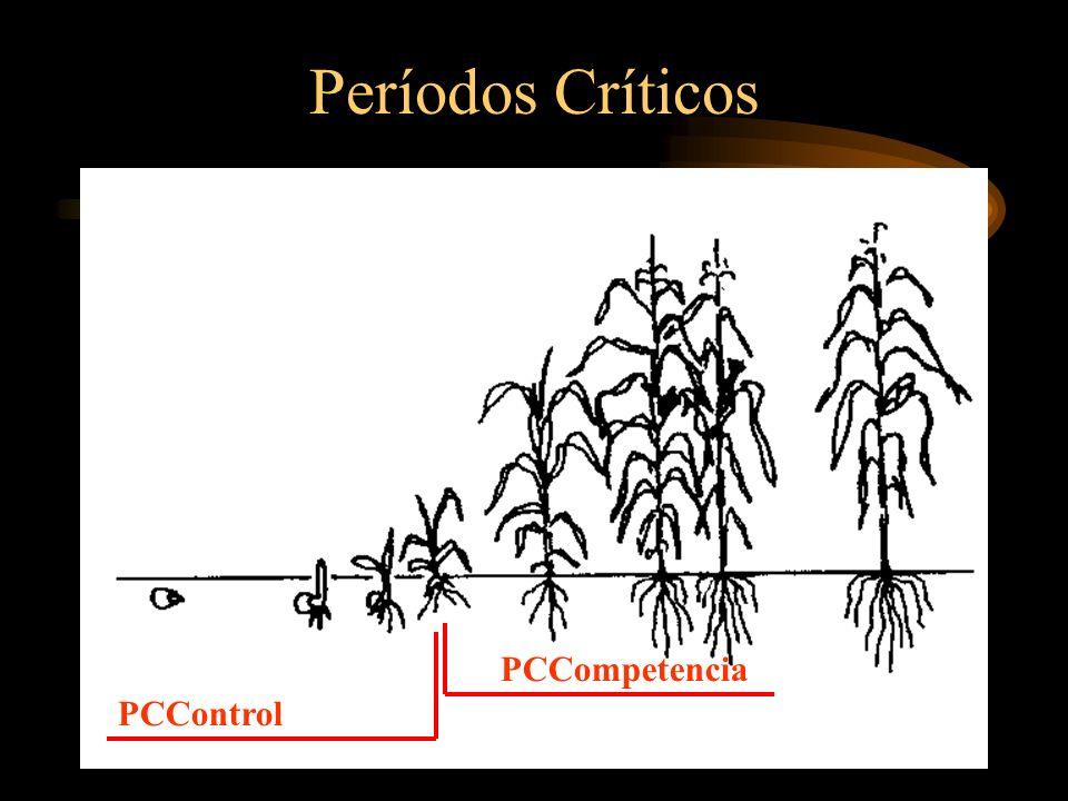 PROGRAMA DE CONTROL 1) DIAGNOSTICO MALEZAS PRESENTES IDENTIFICAR SP NOCIVAS ESTIMAR POSIBLES DAÑOS 2) PLANIFICACION EVALUAR MET.