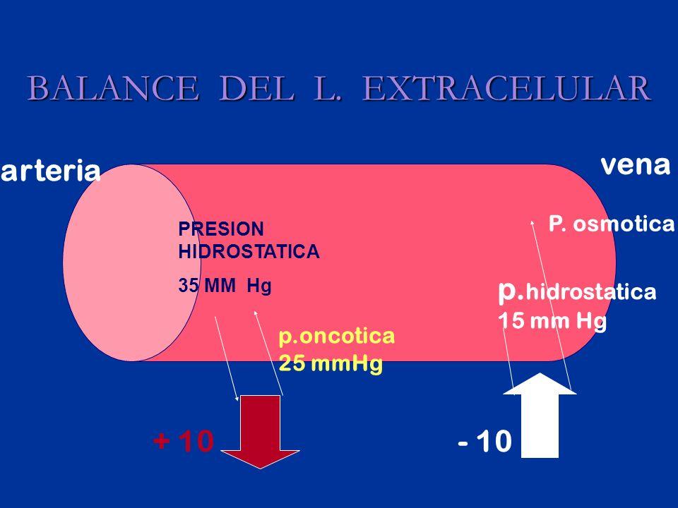 BALANCE DEL L.EXTRACELULAR PRESION HIDROSTATICA 35 MM Hg p.oncotica 25 mmHg + 10 p.