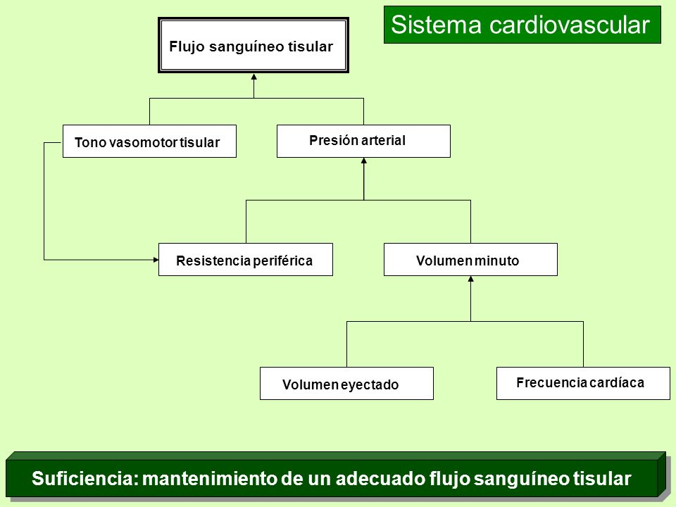Flujo sanguíneo tisular Tono vasomotor tisular Presión arterial Resistencia periféricaVolumen minuto Volumen eyectado Frecuencia cardíaca Sistema card