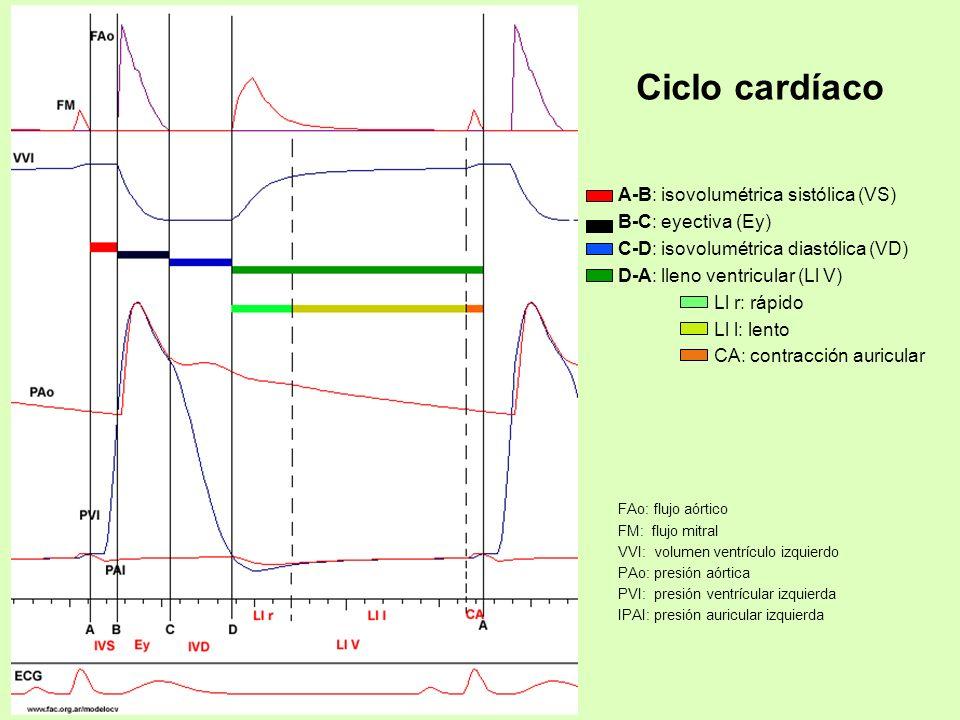 Ciclo cardíaco A-B: isovolumétrica sistólica (VS) B-C: eyectiva (Ey) C-D: isovolumétrica diastólica (VD) D-A: lleno ventricular (Ll V) Ll r: rápido Ll
