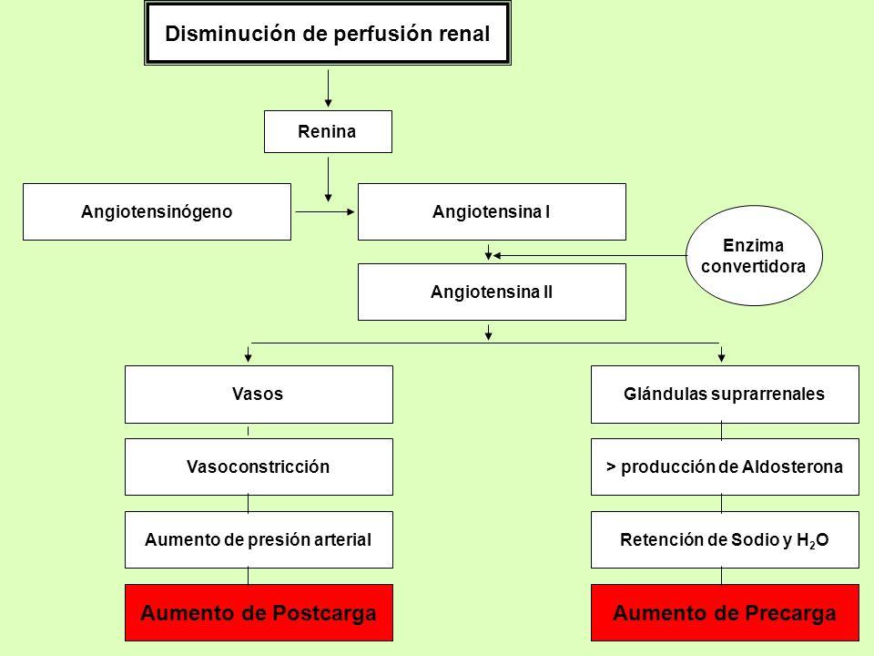 Disminución de perfusión renal Renina AngiotensinógenoAngiotensina I Angiotensina II Glándulas suprarrenales > producción de Aldosterona Vasos Vasocon