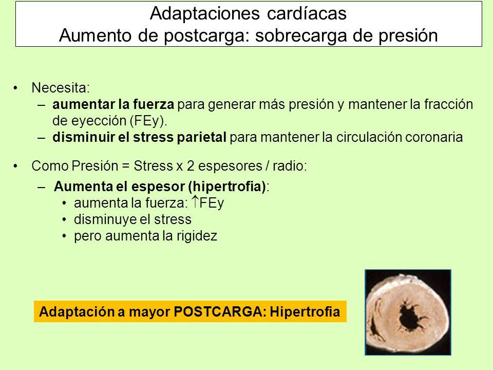 Adaptaciones cardíacas Aumento de postcarga: sobrecarga de presión Necesita: –aumentar la fuerza para generar más presión y mantener la fracción de ey