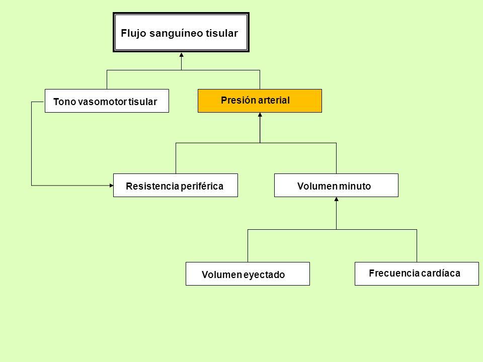 Presión arterial Tono vasomotor tisular Flujo sanguíneo tisular Resistencia periféricaVolumen minuto Volumen eyectado Frecuencia cardíaca