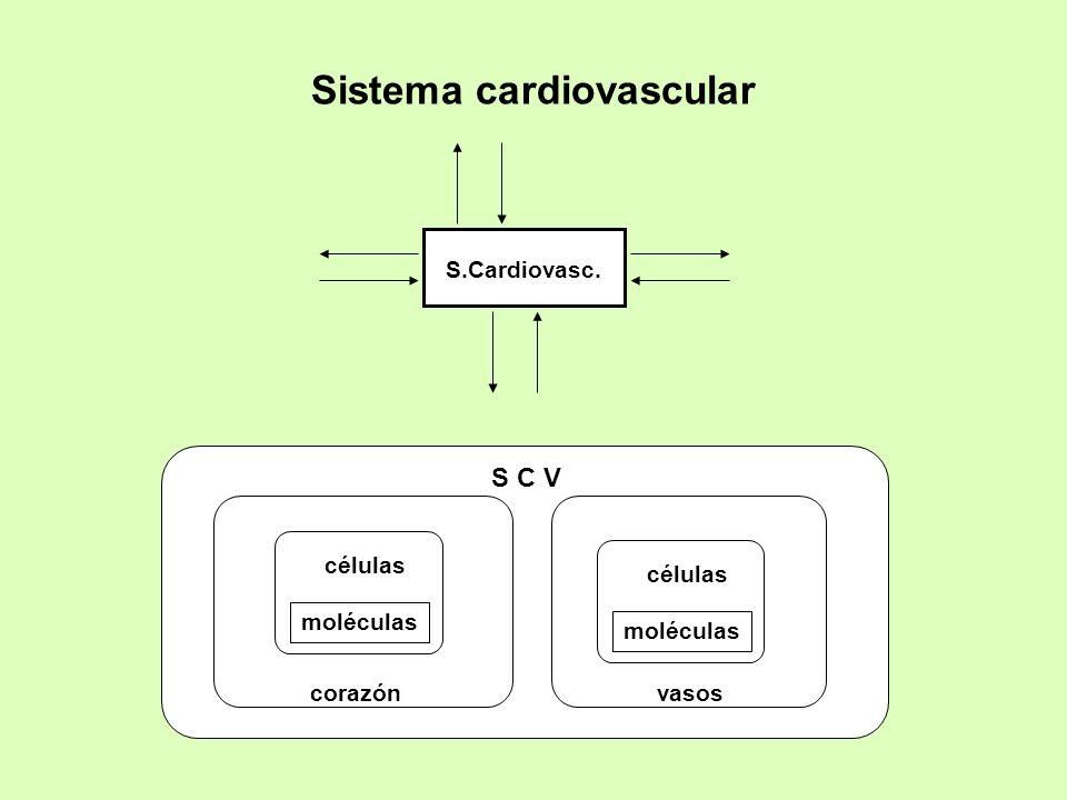 Sistema cardiovascular S C V corazónvasos células moléculas células moléculas S.Cardiovasc.