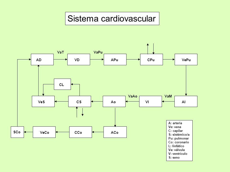 AD VaTVaPu Sistema cardiovascular A: arteria Ve: vena C: capilar S: sistémico/a Pu: pulmonar Co: coronario L: linfático Va: válvula V: ventrículo S: s