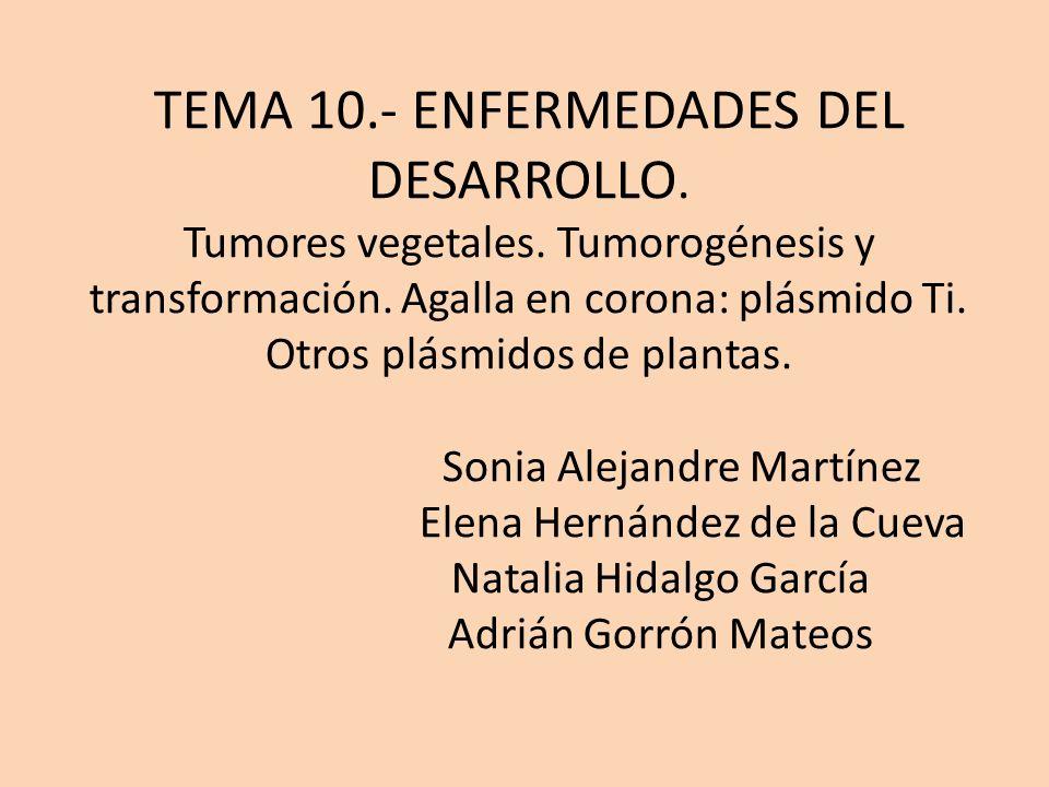 TEMA 10.- ENFERMEDADES DEL DESARROLLO. Tumores vegetales. Tumorogénesis y transformación. Agalla en corona: plásmido Ti. Otros plásmidos de plantas. S
