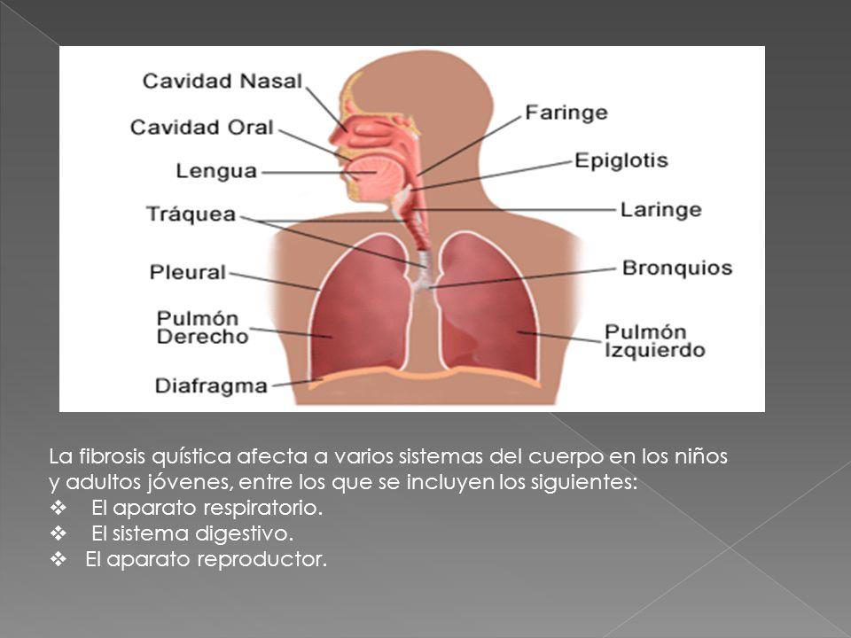 La fibrosis quística afecta a varios sistemas del cuerpo en los niños y adultos jóvenes, entre los que se incluyen los siguientes: El aparato respirat
