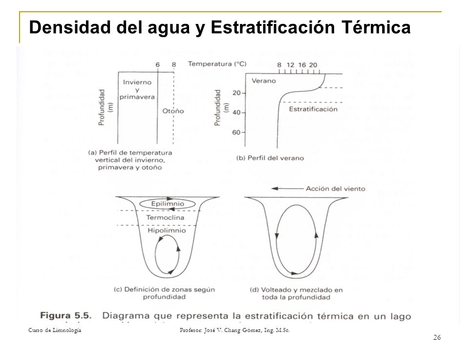 Curso de Limnología Profesor: José V. Chang Gómez, Ing. M.Sc. 26 Densidad del agua y Estratificación Térmica