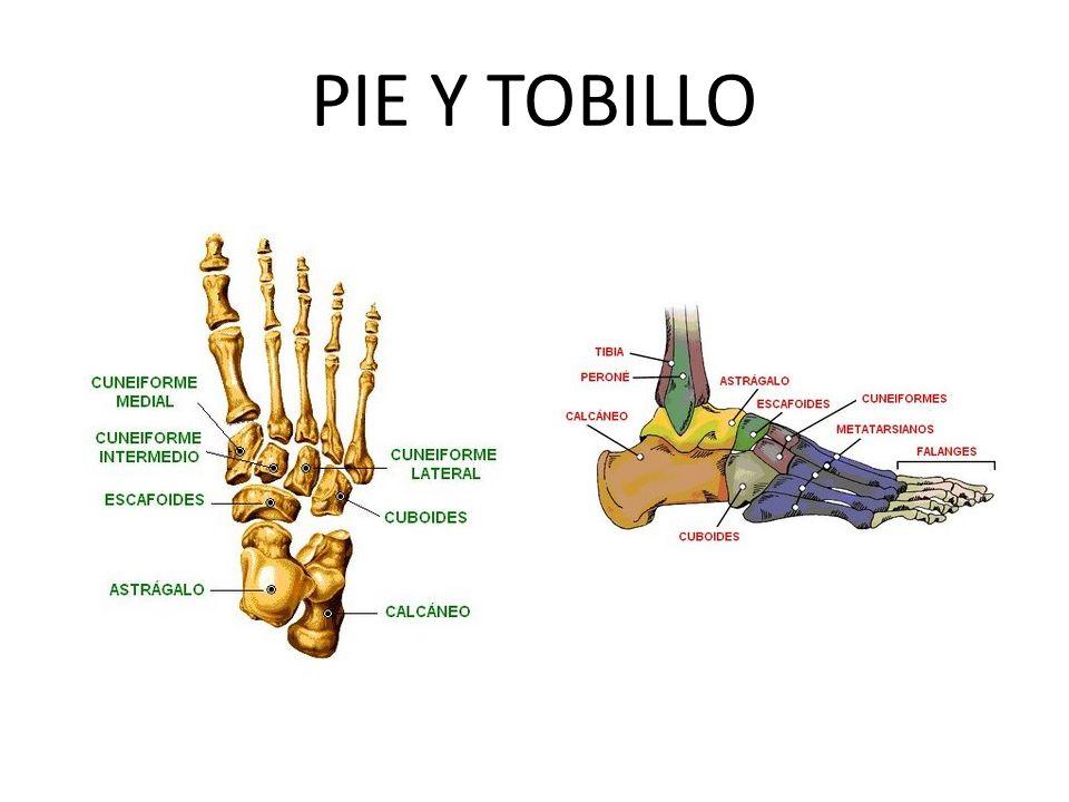 PIE Y TOBILLO