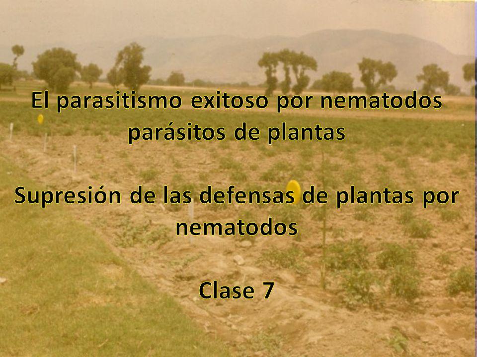Martes, Agosto 28 08:00-09:00 – Clase 7 – Parasitismo de Plantas 1.
