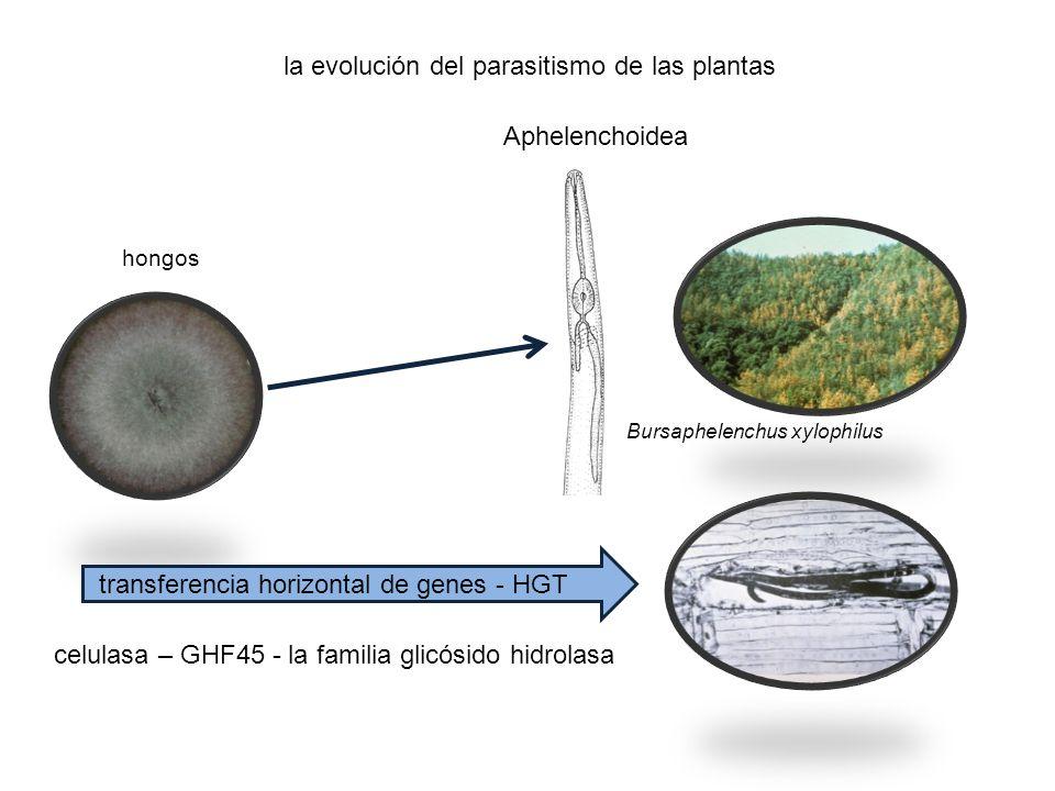 La evolución de la supresión de efectos del PTI, se ha traducido en la evolución de los receptores inmunes, con un dominio de unión de nucleótidos y un dominio rico en leucina (NB-LRR), en las plantas que reconocen las moléculas efectoras y activar al efector activado por la inmunidad (ETI).