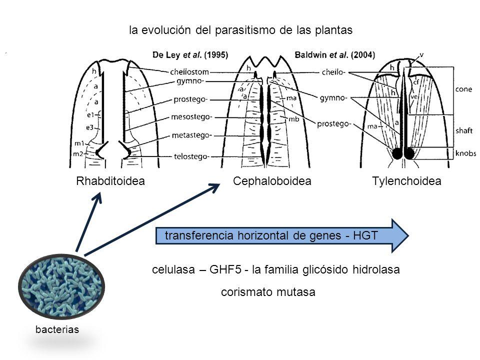 transferencia horizontal de genes - HGT celulasa – GHF5 - la familia glicósido hidrolasa corismato mutasa la evolución del parasitismo de las plantas