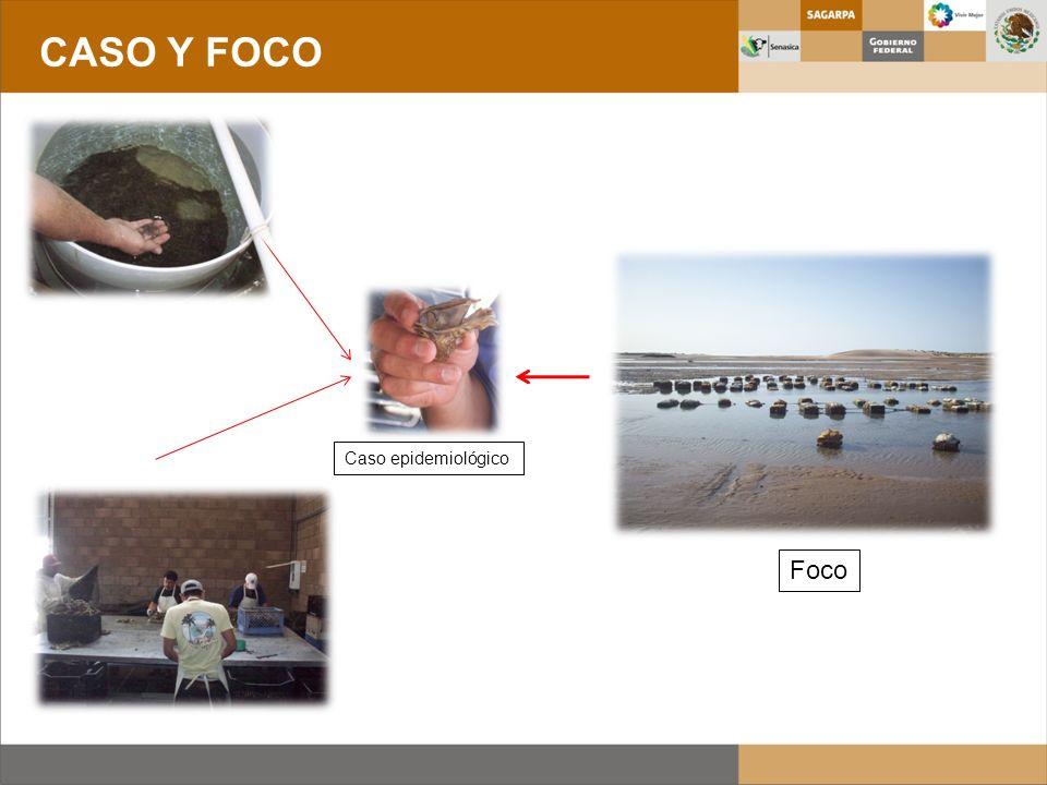 CASO Y FOCO Caso epidemiológico Foco