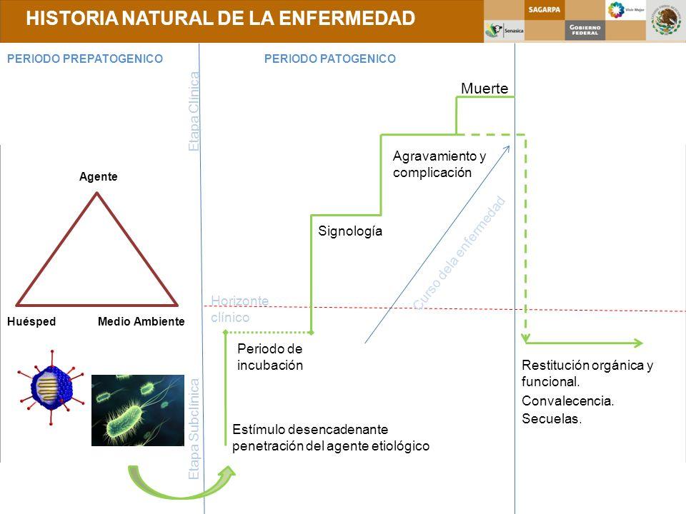 HISTORIA NATURAL DE LA ENFERMEDAD PERIODO PREPATOGENICOPERIODO PATOGENICO Agente HuéspedMedio Ambiente Estímulo desencadenante penetración del agente