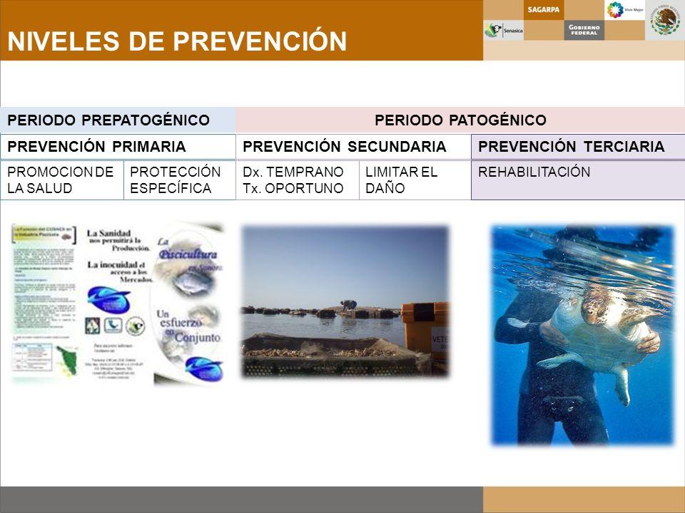 NIVELES DE PREVENCIÓN PERIODO PREPATOGÉNICOPERIODO PATOGÉNICO PREVENCIÓN PRIMARIAPREVENCIÓN SECUNDARIAPREVENCIÓN TERCIARIA PROMOCION DE LA SALUD PROTE