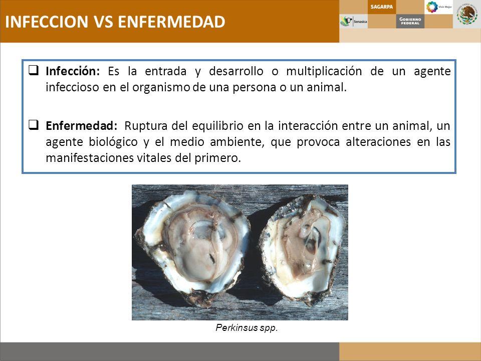 Infección: Es la entrada y desarrollo o multiplicación de un agente infeccioso en el organismo de una persona o un animal. Enfermedad: Ruptura del equ