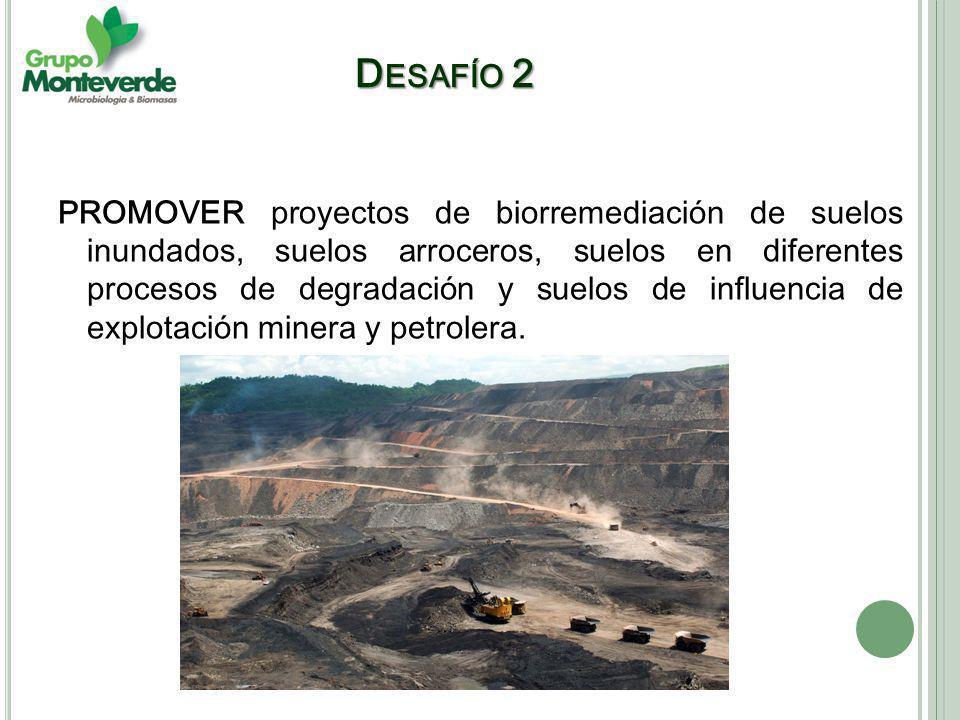 PROMOVER proyectos de biorremediación de suelos inundados, suelos arroceros, suelos en diferentes procesos de degradación y suelos de influencia de explotación minera y petrolera.