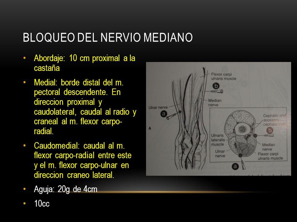 Abordaje: 10 cm proximal a la castaña Medial: borde distal del m. pectoral descendente. En direccion proximal y caudolateral, caudal al radio y cranea