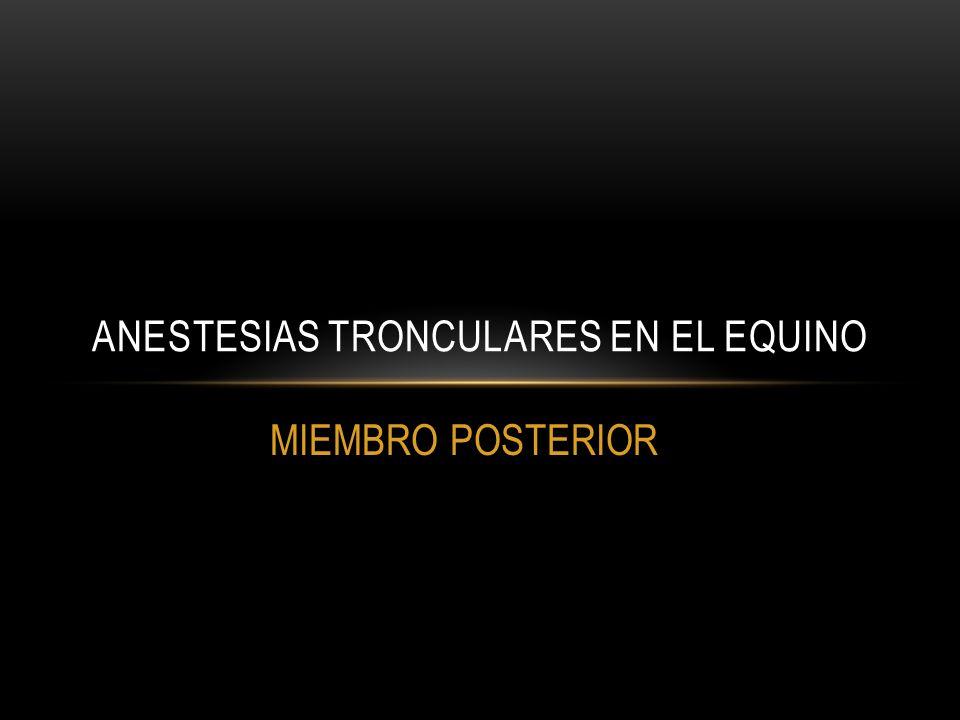 MIEMBRO POSTERIOR ANESTESIAS TRONCULARES EN EL EQUINO
