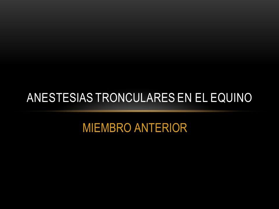 MIEMBRO ANTERIOR ANESTESIAS TRONCULARES EN EL EQUINO