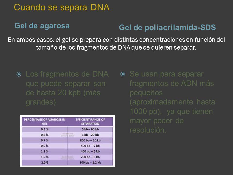 En ambos casos, el gel se prepara con distintas concentraciones en función del tamaño de los fragmentos de DNA que se quieren separar. Gel de agarosa