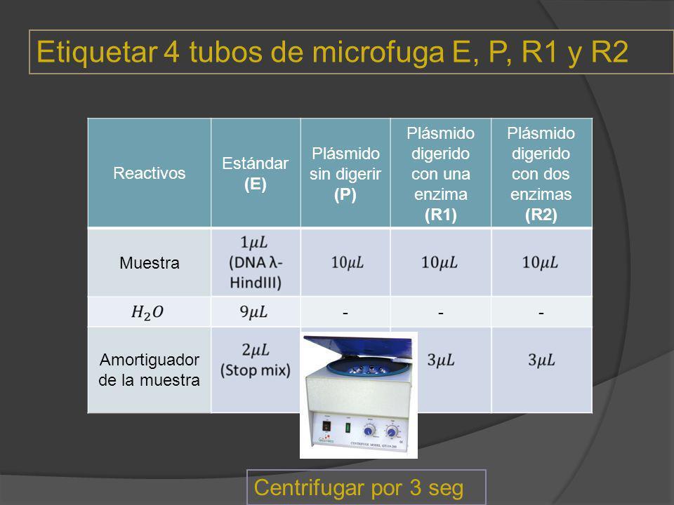 Reactivos Estándar (E) Plásmido sin digerir (P) Plásmido digerido con una enzima (R1) Plásmido digerido con dos enzimas (R2) Muestra --- Amortiguador