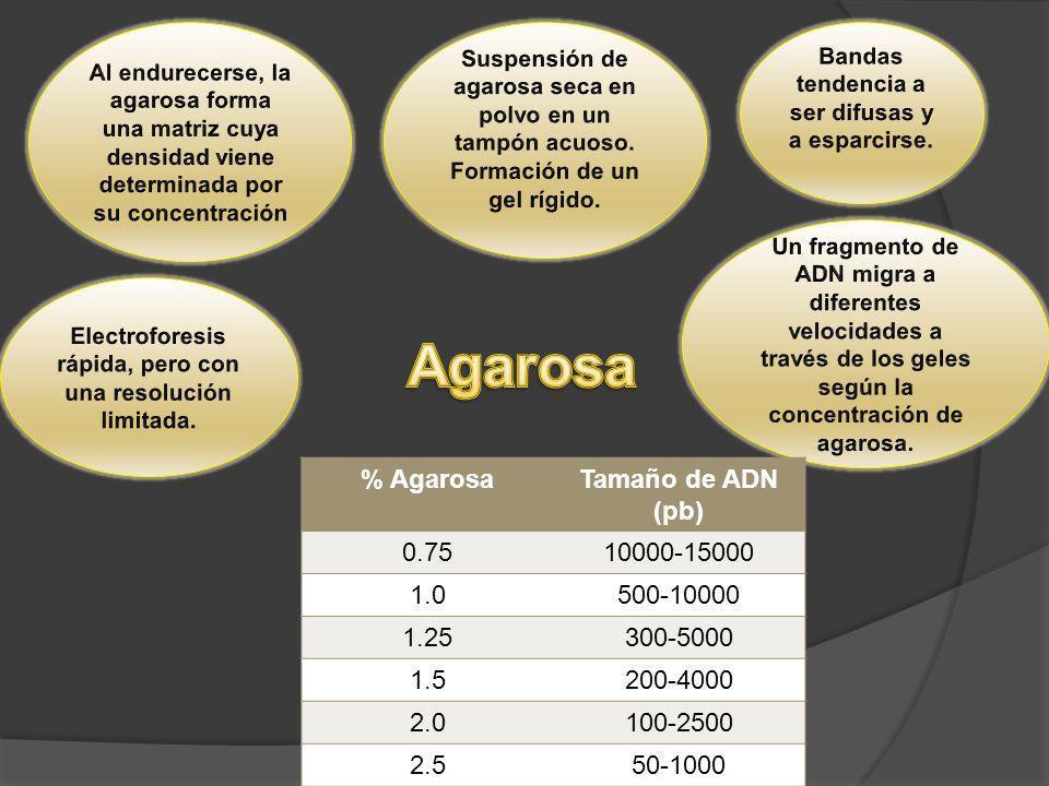 % AgarosaTamaño de ADN (pb) 0.7510000-15000 1.0500-10000 1.25300-5000 1.5200-4000 2.0100-2500 2.550-1000