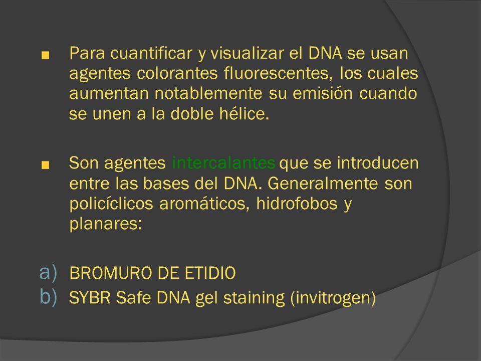 Para cuantificar y visualizar el DNA se usan agentes colorantes fluorescentes, los cuales aumentan notablemente su emisión cuando se unen a la doble h