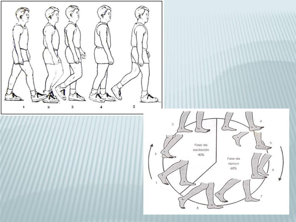 Prueba de tracción y presión de Apley: decúbito prono y flexión rodilla 90º.