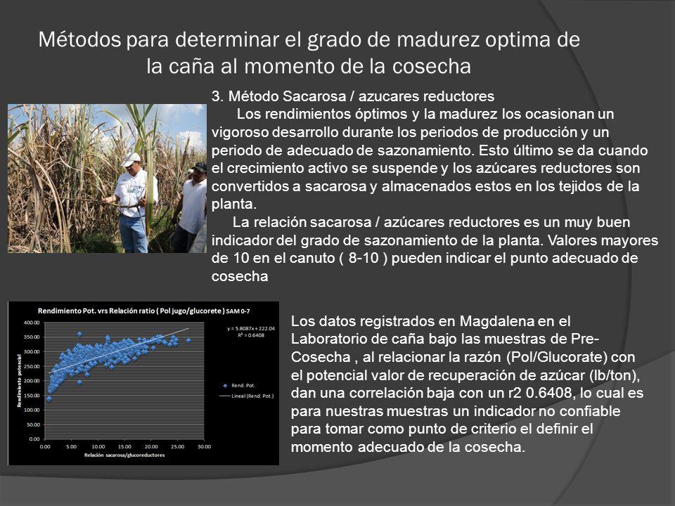 Métodos para determinar el grado de madurez optima de la caña al momento de la cosecha 3. Método Sacarosa / azucares reductores Los rendimientos óptim