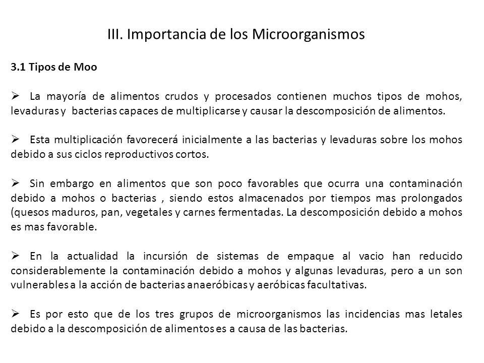 III. Importancia de los Microorganismos 3.1 Tipos de Moo La mayoría de alimentos crudos y procesados contienen muchos tipos de mohos, levaduras y bact