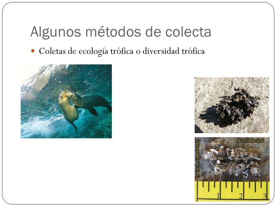 Algunos métodos de colecta Coletas de ecología trófica o diversidad trófica