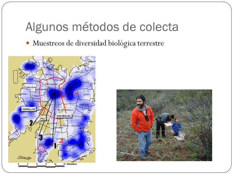Algunos métodos de colecta Muestreos de diversidad biológica terrestre