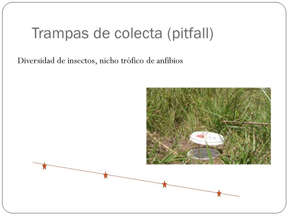 Trampas de colecta (pitfall) Diversidad de insectos, nicho trófico de anfibios